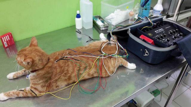 Klinik Akupuntur Hewan