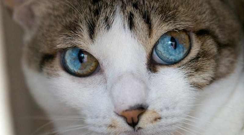 Ada Misteri di Balik Mata Kucing