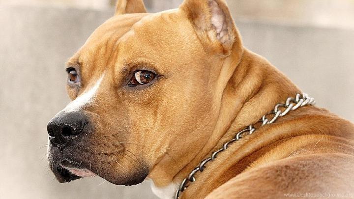Sinyal Jika Anjing Jantan Ingin Kawin