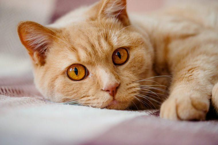 Pahami Jika Kucing Ingin Selalu Tidur Dekat Anda
