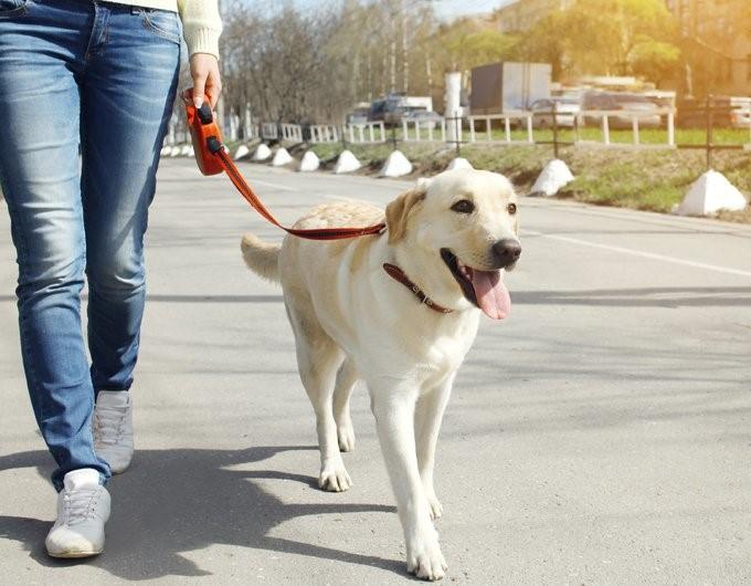 Kesalahan Umum saat Mengajak Anjing Tamasya