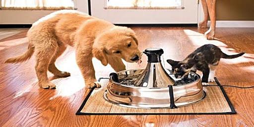 Memelihara Kucing dan Anjing Bersamaan